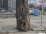 Ugrozenost drvoreda Banja Luka